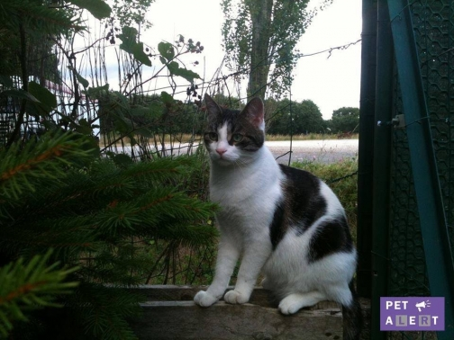 Chat laval